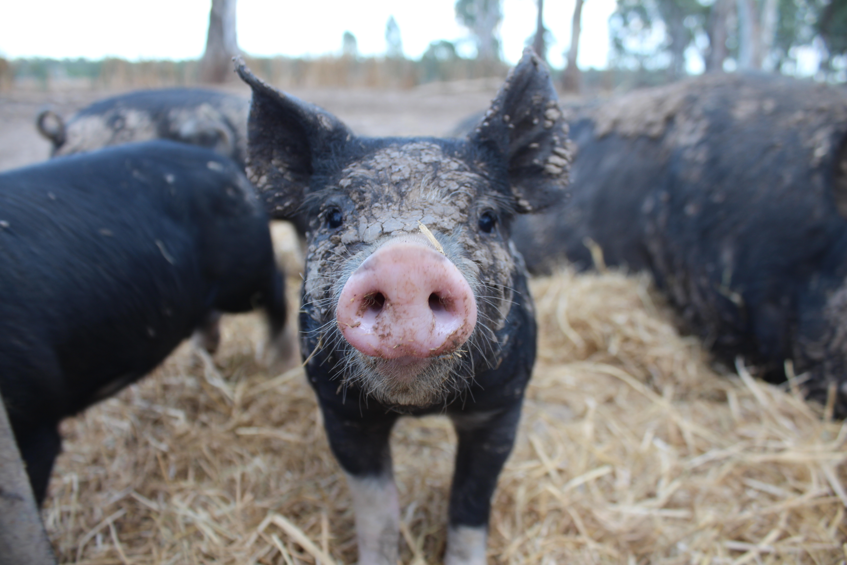 Farmers strive for more palatable choices getting meat to your table