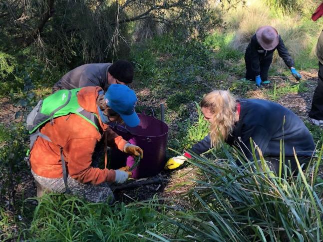 Volunteers of the Friends of Merri Creek planting local indigenous plants.