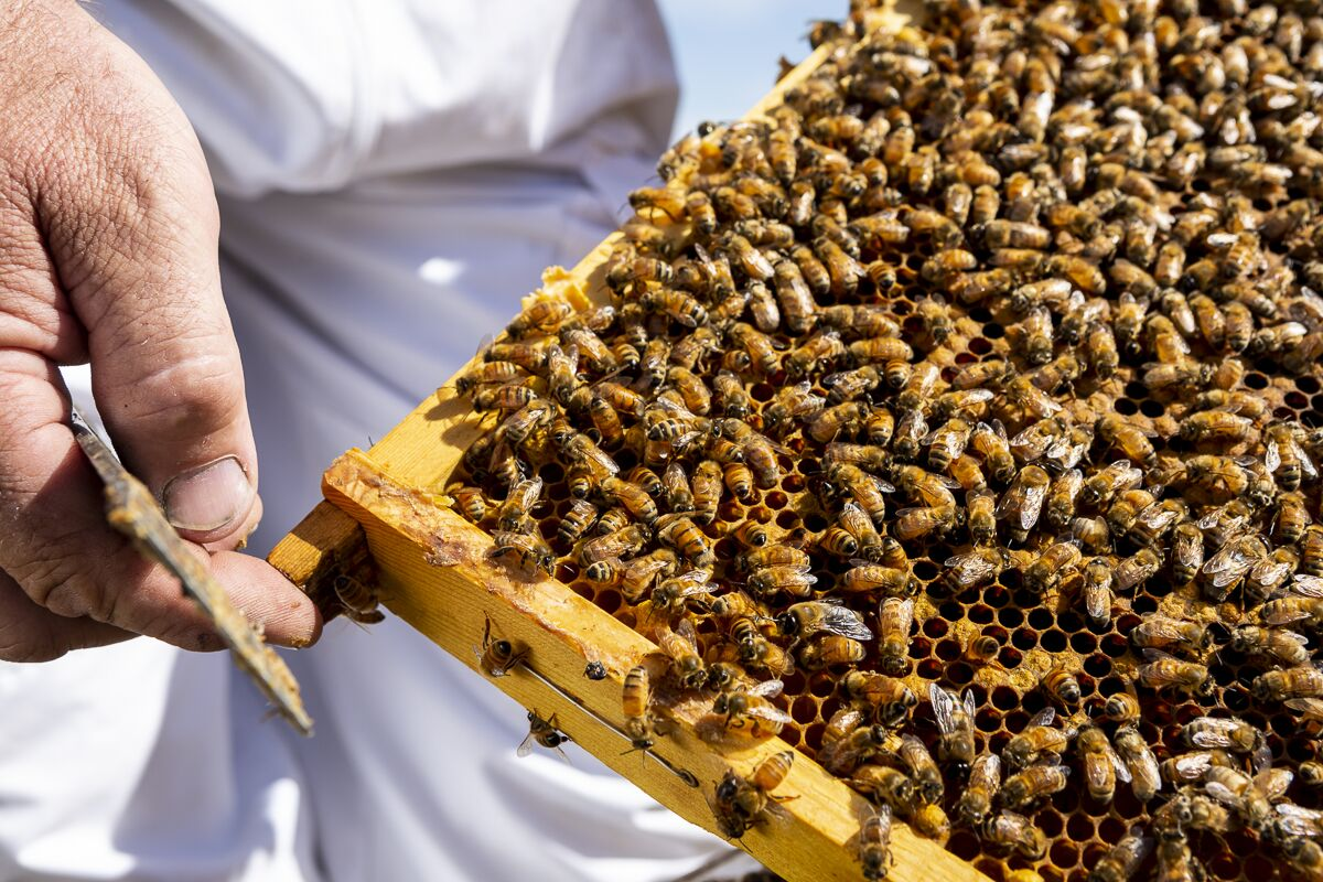 https://the-citizen-web-assets-us.s3.amazonaws.com/uploads/2020/05/12133242/Hives4.jpeg