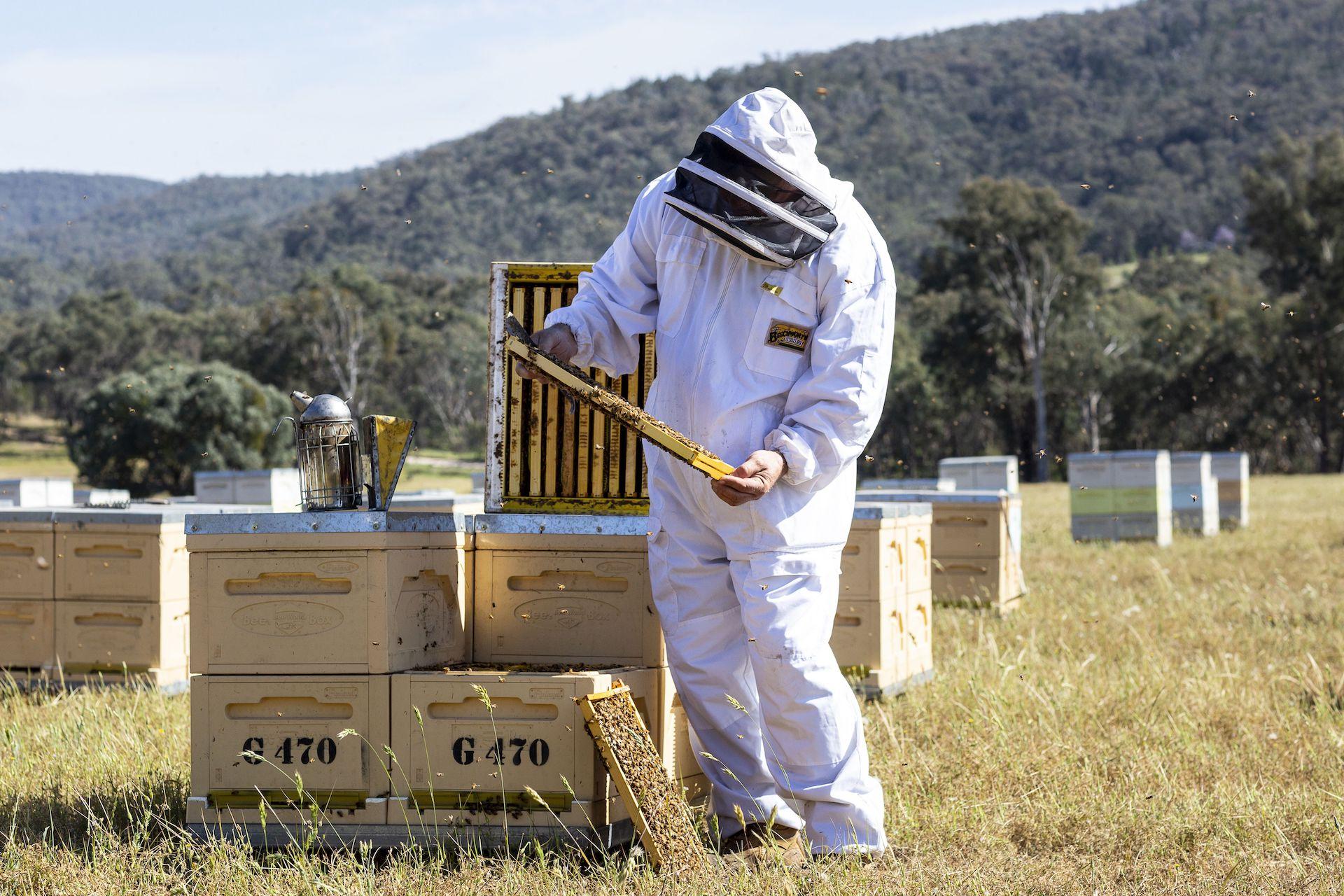 https://the-citizen-web-assets-us.s3.amazonaws.com/uploads/2020/05/12133602/Hives2.jpeg