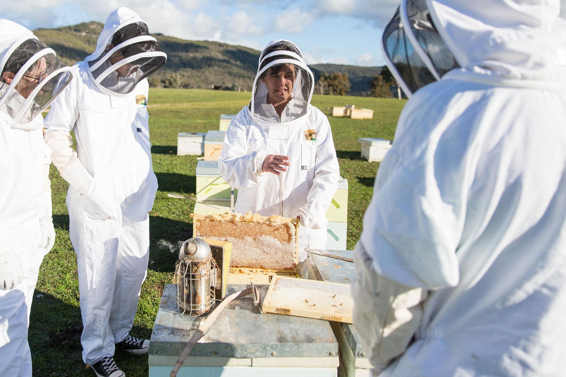 Worrying buzz on the vanishing of honeybees in a changing world