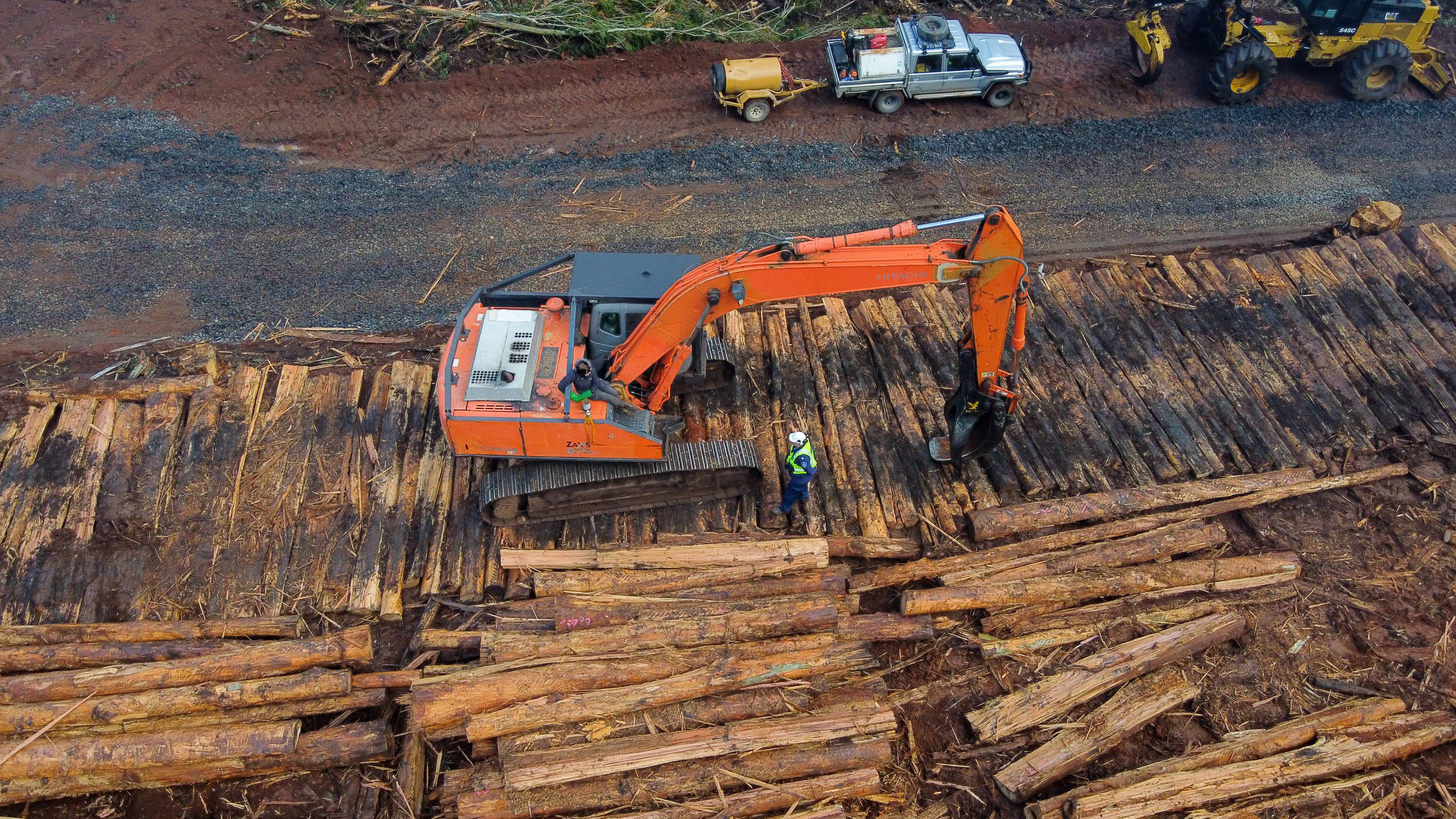 """Justice Debra Mortimer found that """"VicForests' forestry operations damage or destroy existing habitat critical to the survival of the two species"""" and """"prevent new areas of forest from developing into such habitat in the future."""" Photo supplied: Protect Warburton Ranges."""