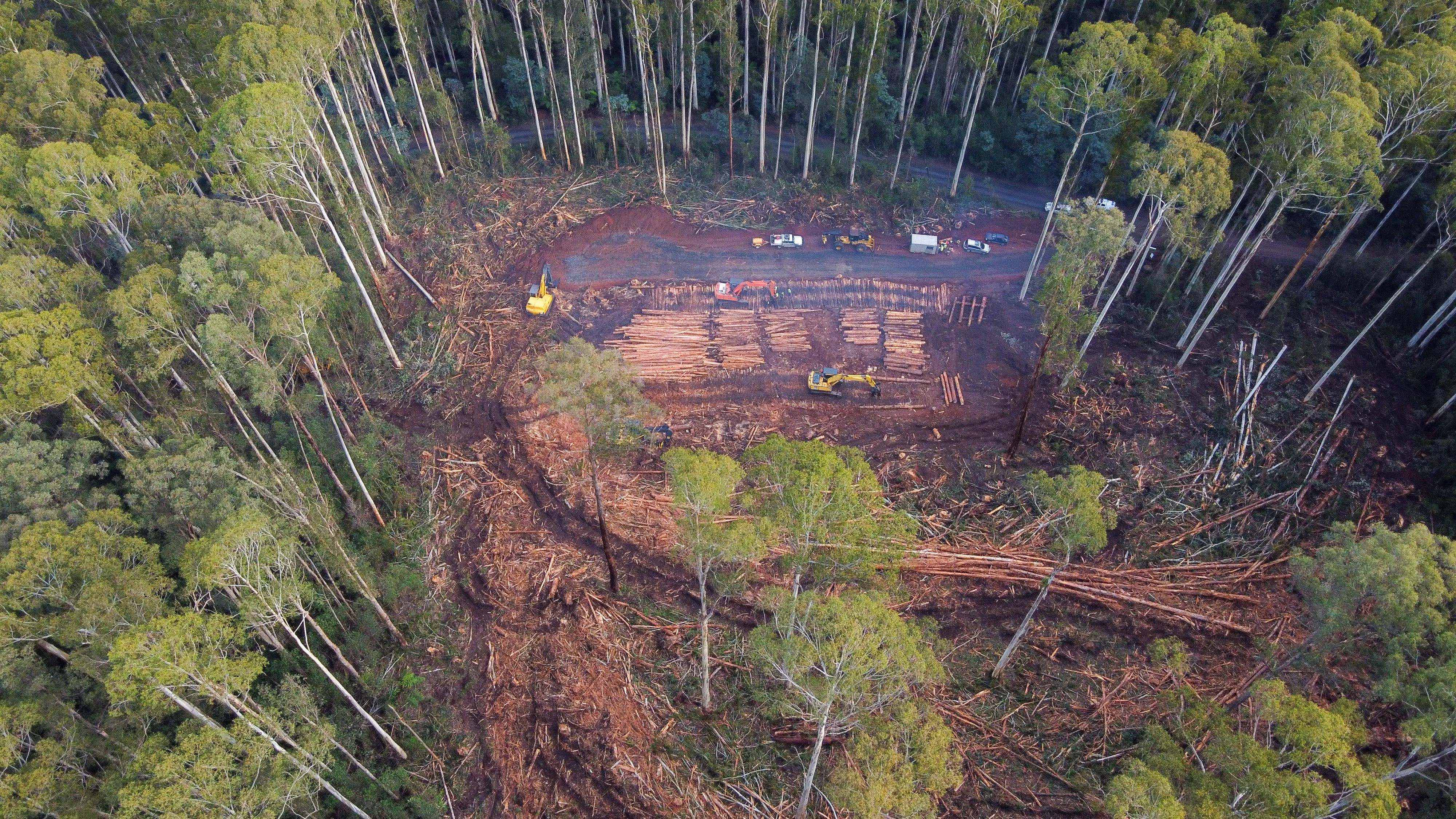 State logging of endangered species habitats illegal, court rules