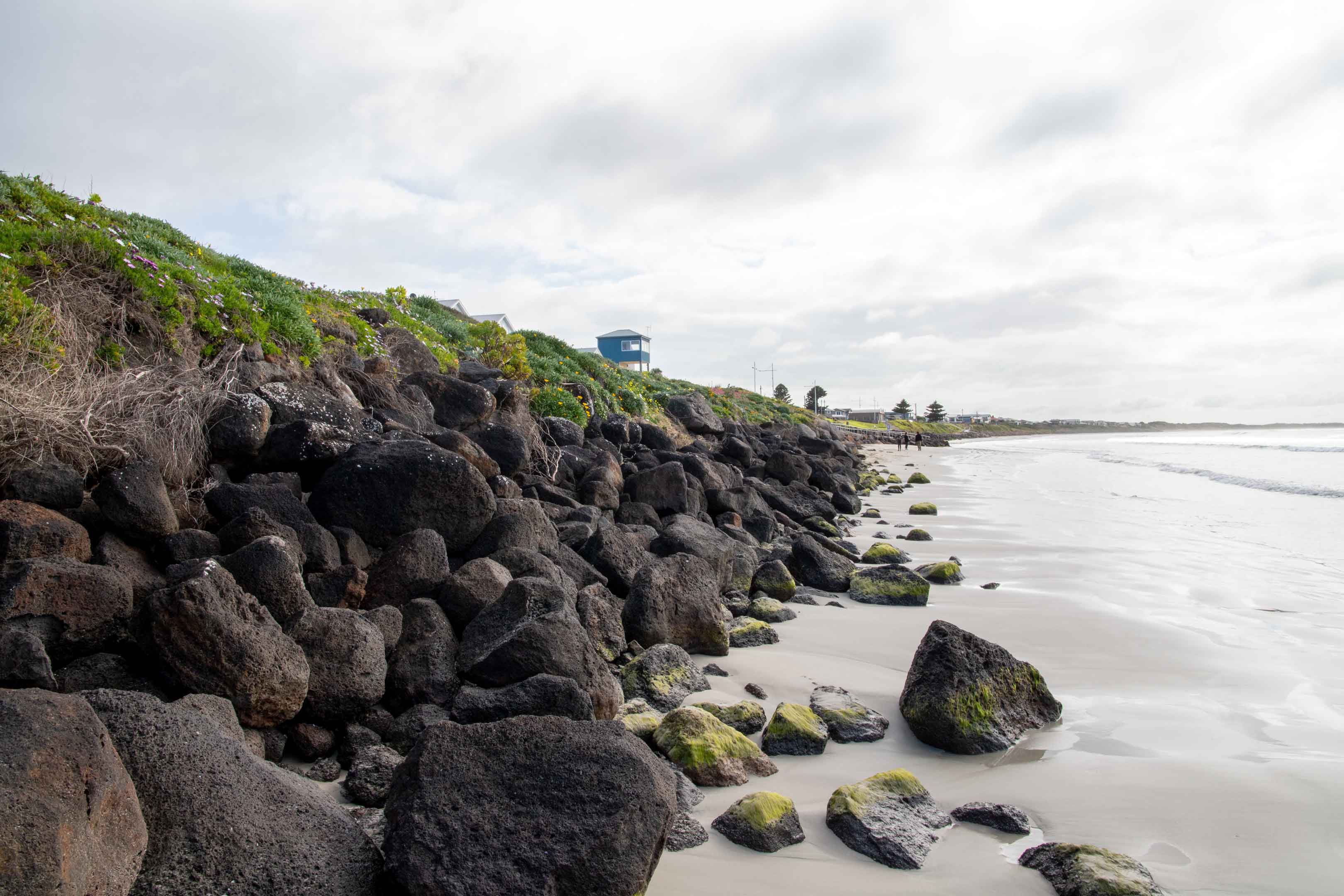 Algae-covered rocks show the mark of the high tide. Higher storm tides and king tides threaten stability. Photo: Steven Zoricic