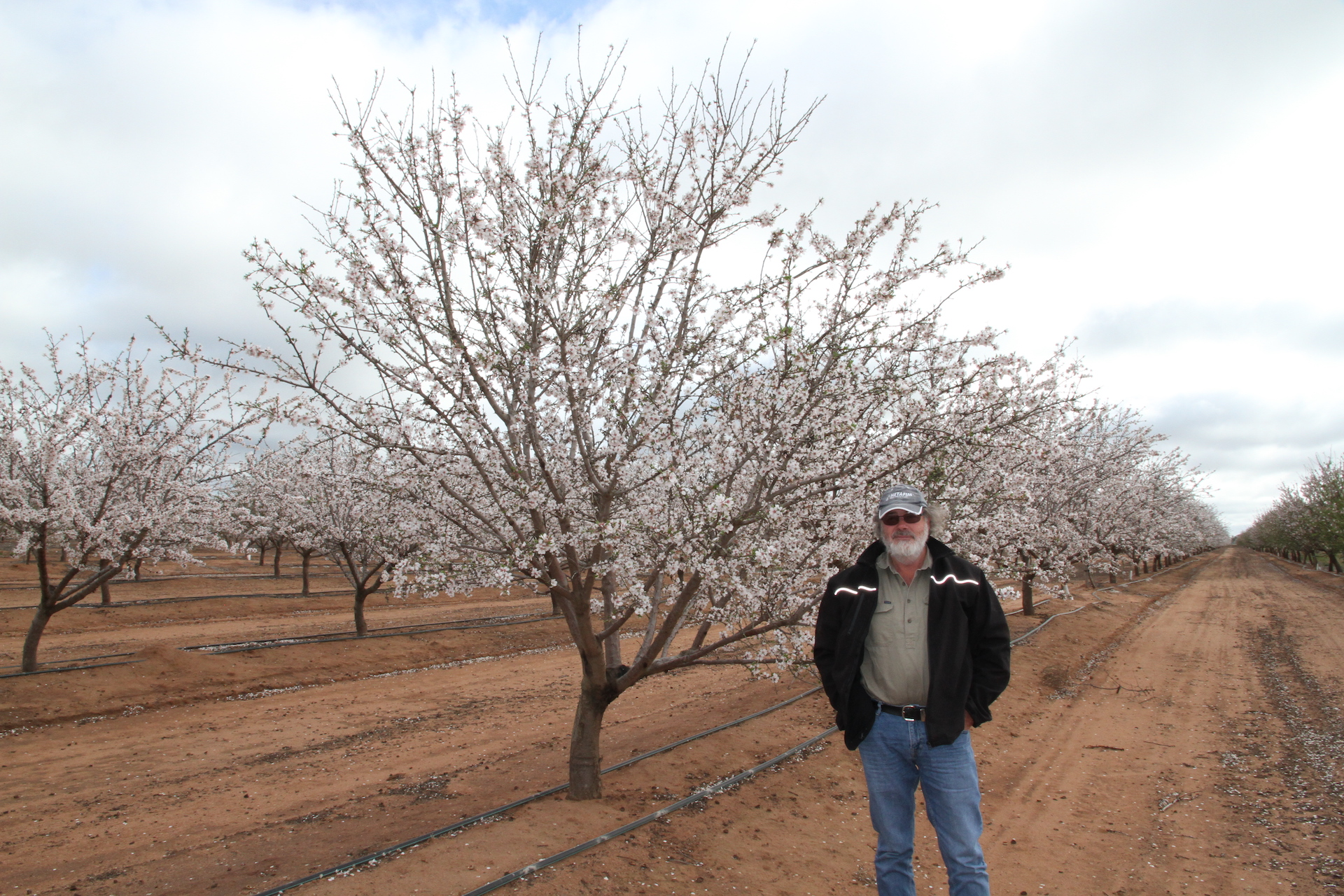 """""""There's a big issue of water security for these plantings,"""" says Griffith almond grower Eugene Dole, who has major concerns about the future of the industry as younger trees start to mature."""