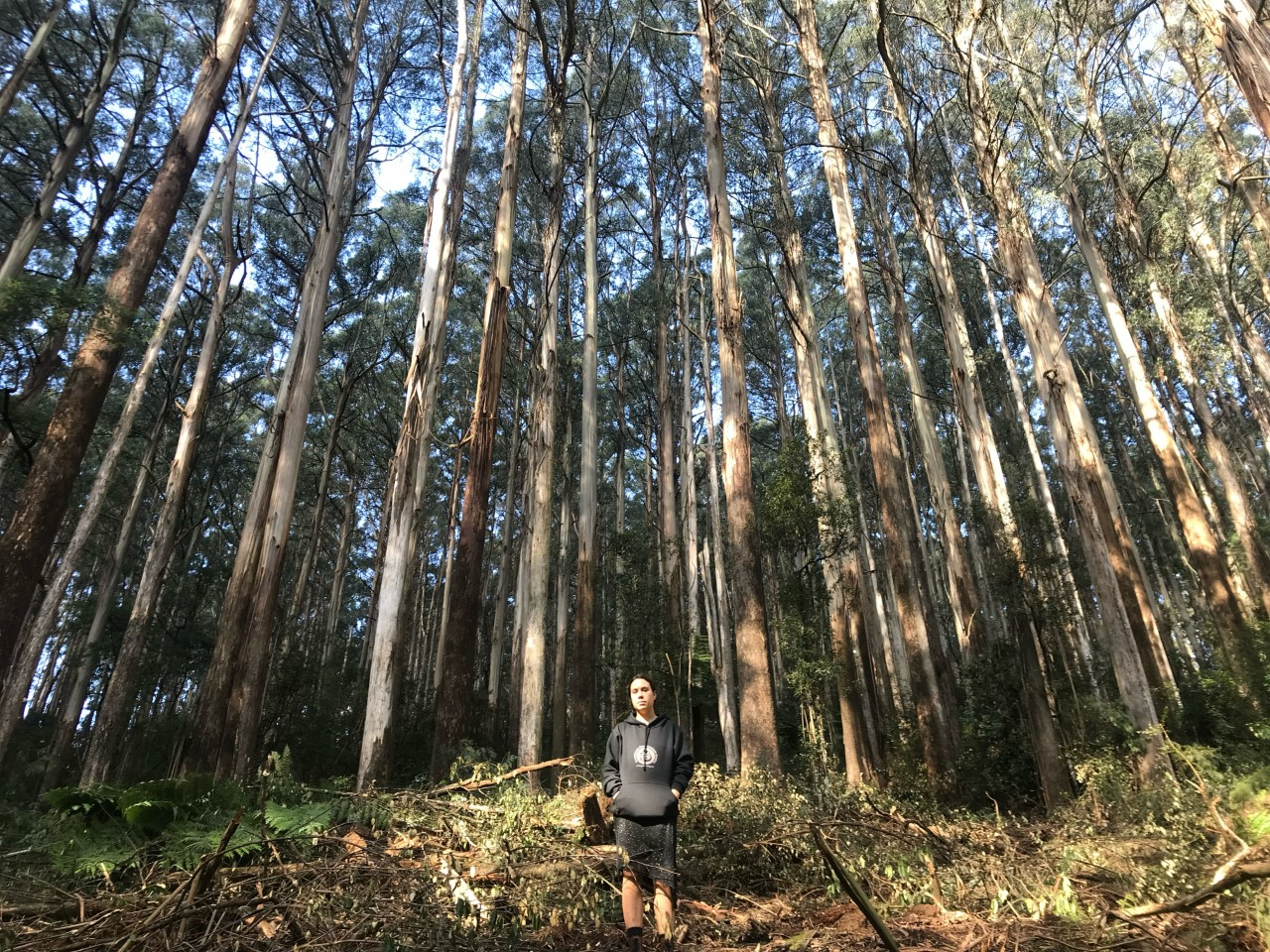 """Forest activist Alana stands in front of a logged section of mountain ash forest in Toolangi. """"If this was all allowed to grow and just do its thing, this would thrive and become really amazing habitat. How are they going to repair this?"""" Photo: Amalyah Hart"""