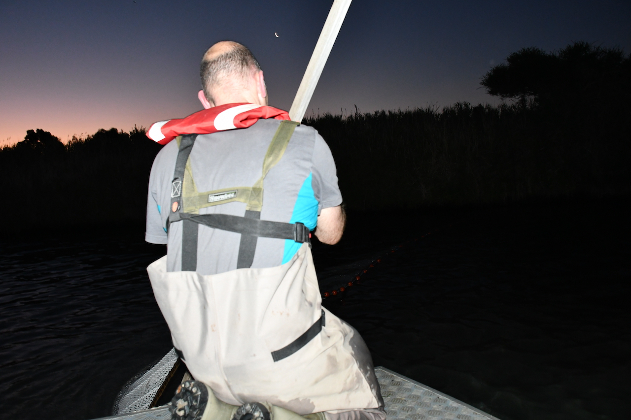 David Dawson on the Patterson River, where the Dandenong Creek flows into Port Phillip Bay, catching and tagging short-finned eels for the Arthur Rylah Institute: Photo: Angus Thomson.